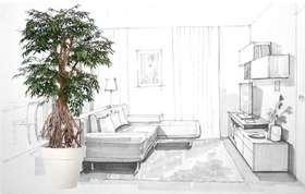 Myrsifolia Root 220 cm Green